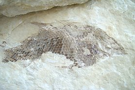 """Fossil Fish"" - Click for a bigger picture!"