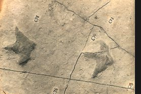 """Dinosaur Footprints found at Suttle Stone"" - Click for a bigger picture!"