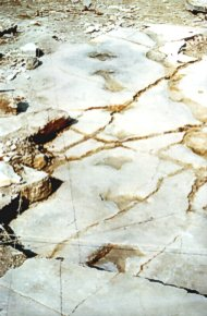 """135 million year old dinosaur trackway found at our Swanage Quarry"" - Click for a bigger picture!"